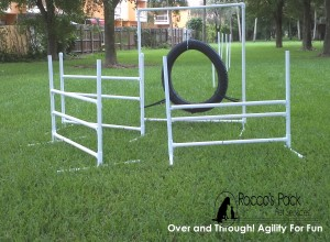 Over and Through!  Agility for Fun!