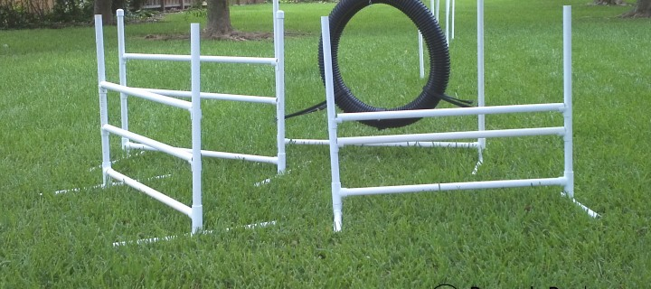 Intro to Dog Agility: Over and Through