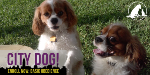 Enroll now in our basic obedience class!