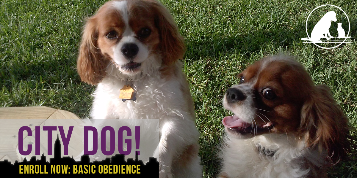 Basic Obedience Dog Training Class