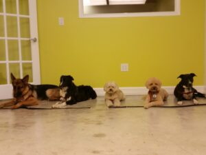 Rocco's Pack Day Training Crew